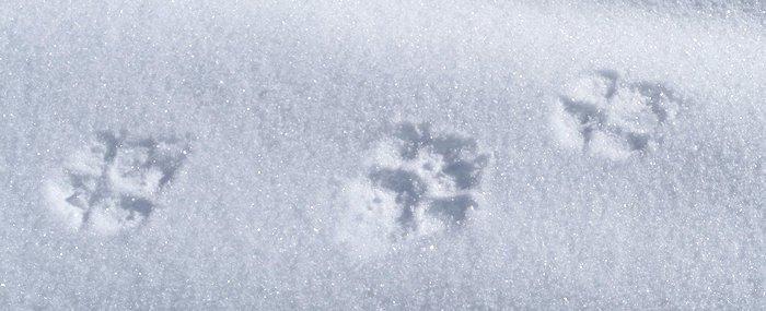 Spuren von Tieren im Schnee