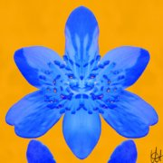 Blüte Blau gespiegelt vor Gelb