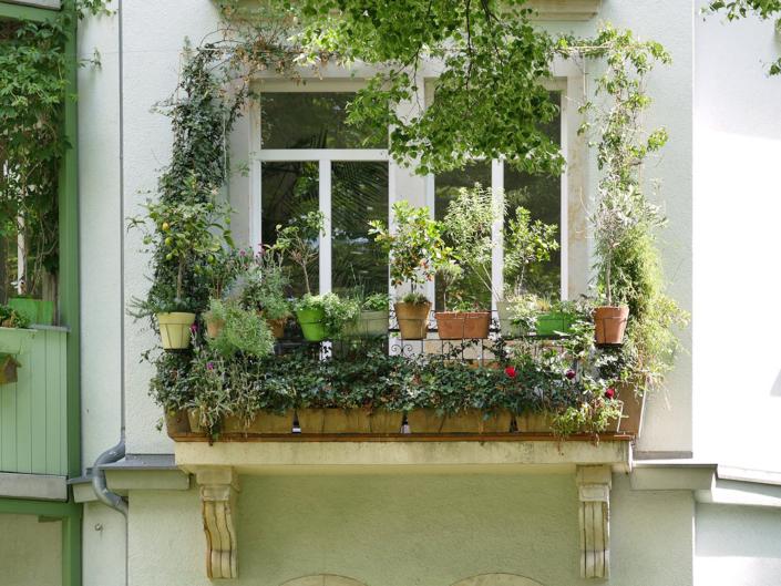 Pflanzenvielfalt Balkon