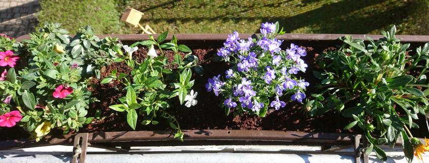 Blumenkasten bepflanzt mit bunten Blumen