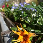 Balkon mit frisch bepflanztem Blumenkasten